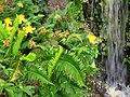 Hakone Gardens, Saratoga, CA - IMG 9206.JPG