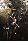 Hanging in Spotlight.jpg