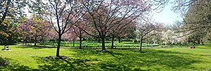 Harris Garden - Cherry circle in April.