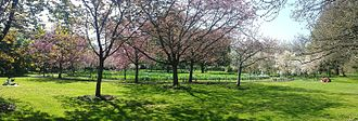 Harris Garden - Cherry circle in April.