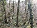 Harton Hollow Wood - geograph.org.uk - 388054.jpg