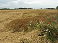 Harvested field near Heath Road - geograph.org.uk - 504915.jpg