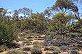Hattah-Kulkyne National Park (31789616754).jpg