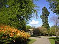 Hazlehead Park in Spring - geograph.org.uk - 98298.jpg