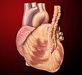 Heart internal mammary ccoronary graft.jpg