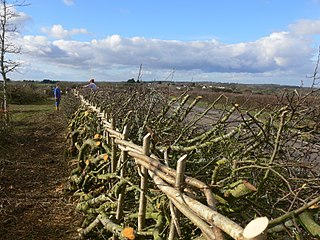 Hedgelaying Cut and Lay