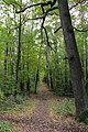 Heide - panoramio.jpg