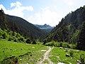Hengduan conifer forests.jpg