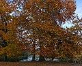 Herbst im Schlosspark Charlottenburg, November 2018.jpg