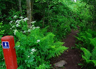 Hestehave Wood - Hiking Trail no. 91, is part of the international North Sea Trail, passing through Hestehave Wood.