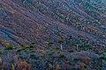 Hillside colors.jpg