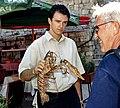 Homarus gammarus in Dubrovnik 02 (js).jpg