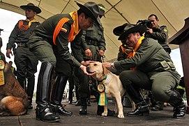 Homenaje a los animales héroes de Colombia (5748373978).jpg