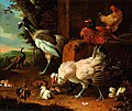 Hondecoeter Domestic fowl.jpg