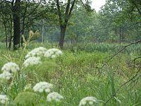 Hoosier Prairie P7150009.jpg