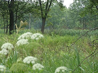 Hoosier Prairie State Nature Preserve - View of wetland prairie