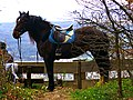 Horse In The Wind - panoramio.jpg