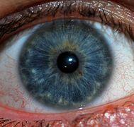 Eye color  Wikipedia