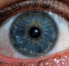 Iris on Para Otros Usos De Este T  Rmino  V  Ase Iris  Desambiguaci  N