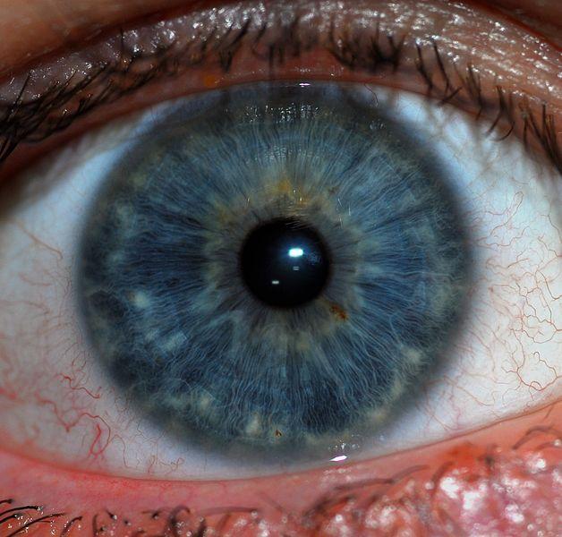 File:Human Iris JD052007.jpg