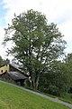 ID 1317 Kirschbaum in Willersdorf.JPG