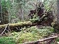 Igelsjöskogen 2017c.jpg