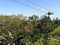 Iguape - SP - panoramio (246).jpg