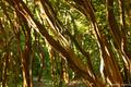 Ilha do pontal - Parque Natural Municipal de Niterói - RJ.png