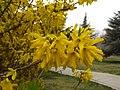 In the spring of Fuyang Park 7.jpg