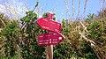 Indicación del Camí de Cavalls (4 de agosto de 2015, Platges de Fornells).jpg