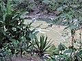 Inkaterra Machu Picchu Pueblo Hotel and Nature Reserve - Aguas Calientes, Peru (4875676341).jpg