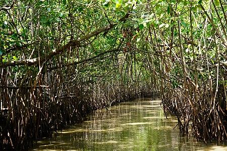 Inside Pichavaram Mangrove Forest