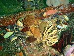 Invertebrate aggregation on the wreck of MFV Princess Elizabeth P3167274.JPG