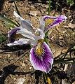 Irisdouglas-capesebastian.jpg