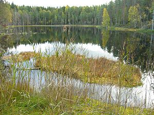 A small pond in Isojärvi National Park