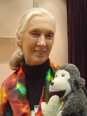 English: Jane Goodall is holding her stuffed c...