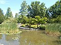 Japanese garden. Reeds. - Margaret Island, Budapest, Hungary.JPG