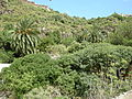 Jardín canario 18.JPG