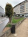 Jardin Lavoisier (Lyon).jpg