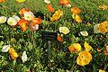 Jardin des plantes en fleurs à Paris le 3 avril 2017 - 28.jpg