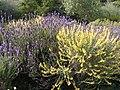 Jardinbotanique14.JPG