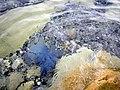 Jellyfish - panoramio.jpg