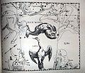 """Johannes Hevelius - Prodromus Astronomia - Volume III """"Firmamentum Sobiescianum, sive uranographia"""" - Tavola BBB - Piscis Notius et Grus.jpg"""