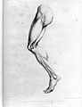 John Pugh, A treatise on the science of muscular action Wellcome L0026366.jpg