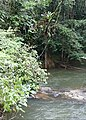 Jungle Creek (26132802108).jpg