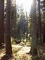 Jurmala Forest (Bulduri) - panoramio.jpg