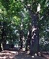 Kędzierzyn-Koźle, Planty miejskie (2).jpg