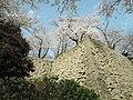 Kakuzan-Koen, Park - panoramio.jpg