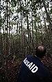 Kalimantan deforestation and degradation 14 (10706189115).jpg
