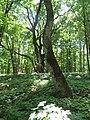 Kaniv Nature Reserve (May 2018) 86.jpg